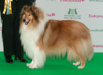 http://crufts.fossedata.co.uk/crpix/2010_COR_BOB.jpg