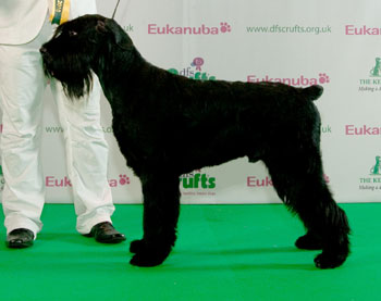 http://crufts.fossedata.co.uk/crpix/2010_GIS_BOB.jpg