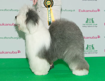http://crufts.fossedata.co.uk/crpix/2010_OES_BOB.jpg