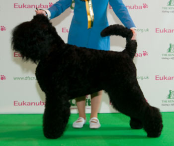 http://crufts.fossedata.co.uk/crpix/2010_RBT_BOB.jpg