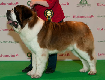 http://crufts.fossedata.co.uk/crpix/2010_STB_BOB.jpg
