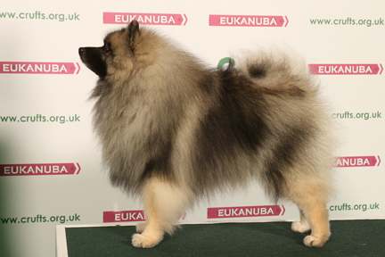 http://crufts.fossedata.co.uk/crpix/2016_KES_BOB.jpg