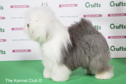 Crufts 2017 Results |