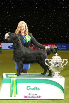 Labrador best of breed crufts 2015